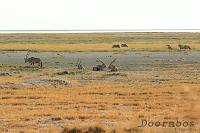 Etosha Namibie.jpg