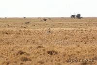Makgadikgadi NP Botswana.jpg